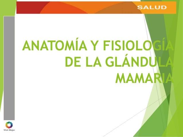 SALUD ANATOMÍA Y FISIOLOGÍA DE LA GLÁNDULA MAMARIA