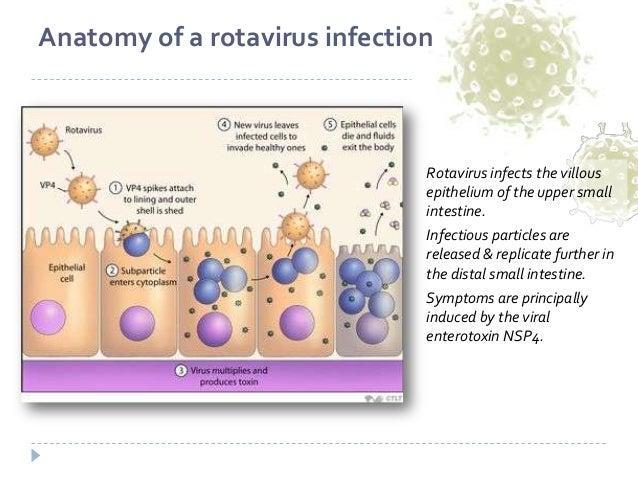 Risultati immagini per intestinal rotavirus infection