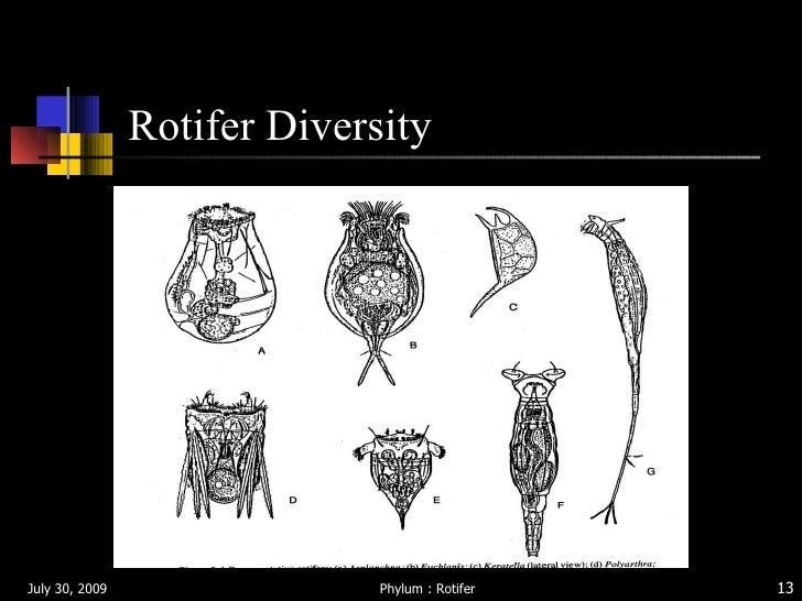 Rotifer s&l fashions dress collection