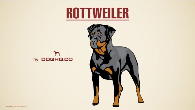 by © DogHQ.co http://doghq.co ROTTWEILER