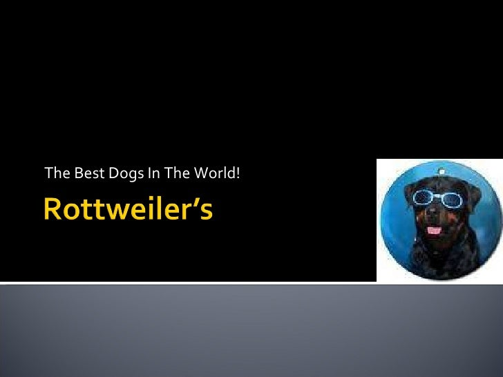 The Best Dogs In The World!