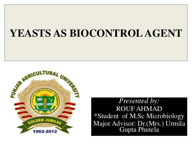 YEASTS AS BIOCONTROLAGENTPresented by:ROUF AHMAD*Student of M.Sc MicrobiologyMajor Advisor: Dr.(Mrs.) UrmilaGupta Phutela