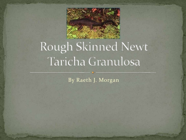 By Raeth J. Morgan<br />Rough Skinned NewtTaricha Granulosa<br />