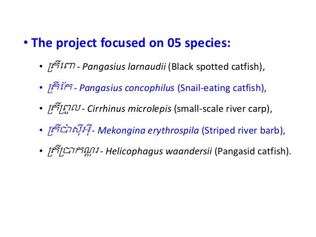 • The project focused on 05 species: • !តីេ% - Pangasius larnaudii (Black spotted catfish), • !តី ែក - Pangasius concophil...