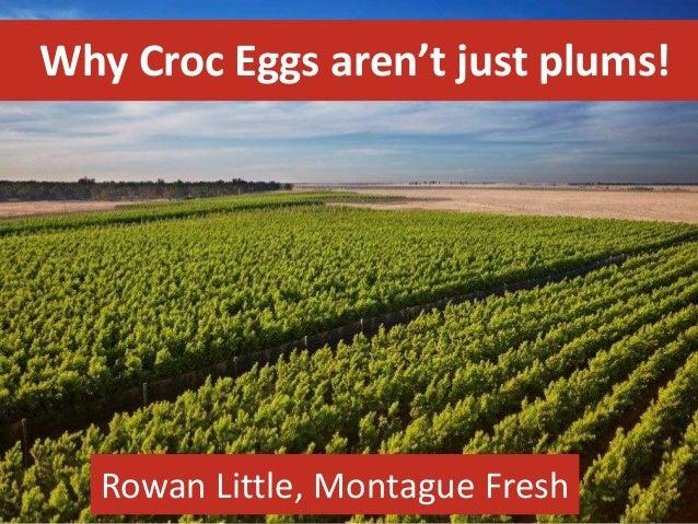 Why Croc Eggs aren't just plums! Rowan Little, Montague Fresh
