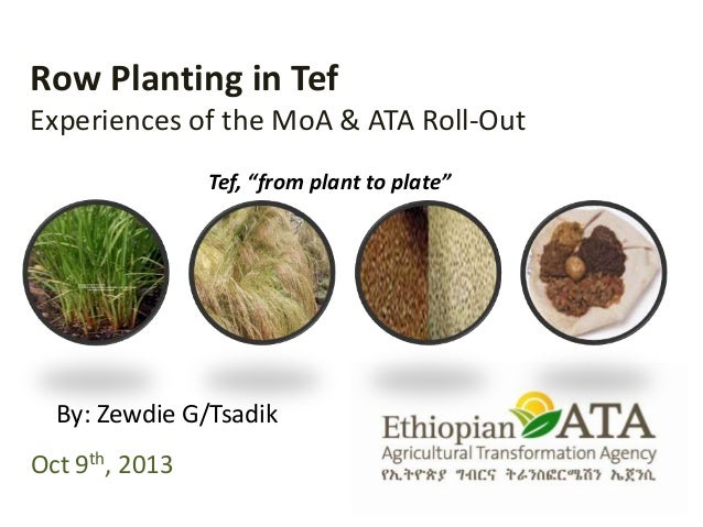 "Row Planting in Tef Experiences of the MoA & ATA Roll-Out Oct 9th, 2013 By: Zewdie G/Tsadik Tef, ""from plant to plate"""