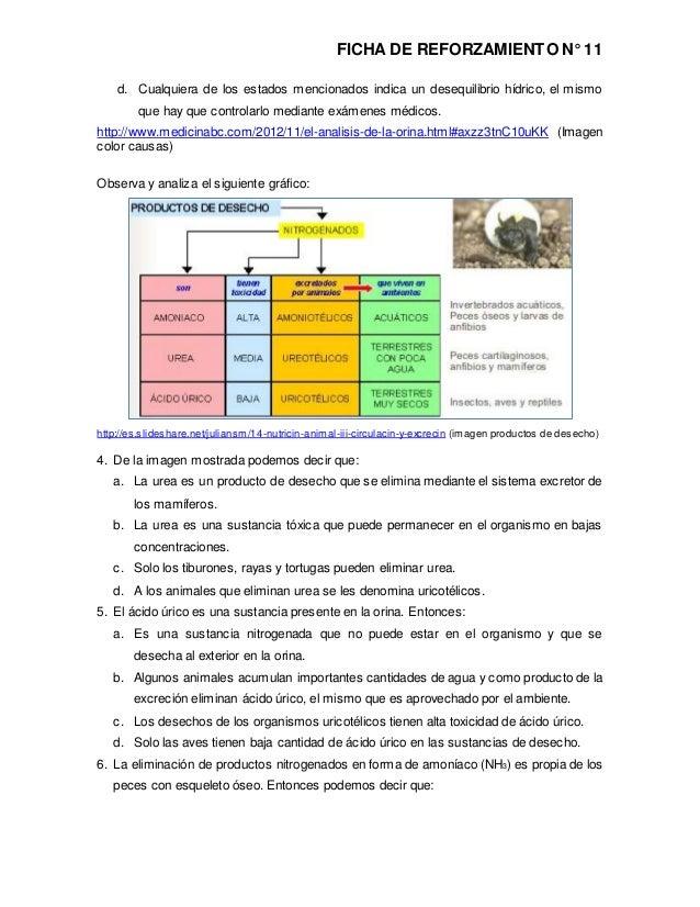 Rp cta2-k11 - ficha n° 11