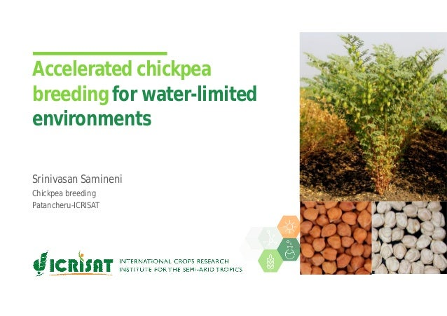 Accelerated chickpea breeding for water-limited environments Srinivasan Samineni Chickpea breeding Patancheru-ICRISAT