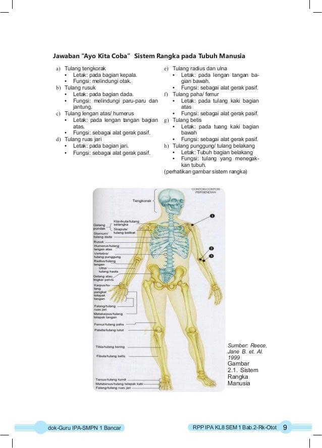 """Jawaban """"Ayo Kita Coba"""" Sistem Rangka pada Tubuh Manusia  a) Tulang tengkorak  Sumber: Reece,  Jane B. et. Al.  1999  Gamb..."""