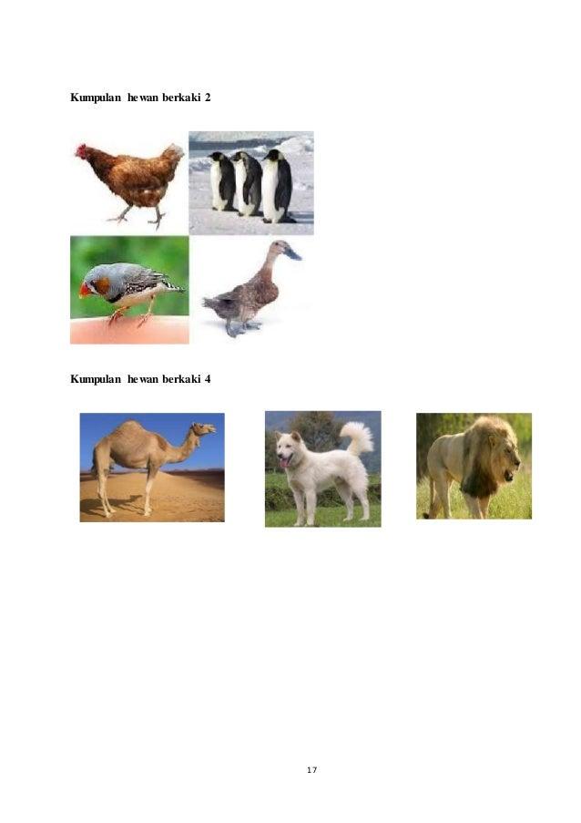 66 Gambar Kumpulan Hewan Berkaki Dua Gratis
