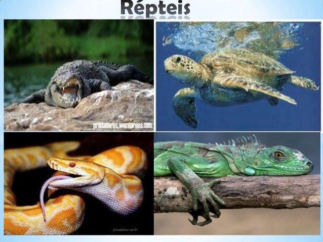 Os répteis surgiram aproximadamente há 300 milhões de anos, na era paleozóica , quando os vertebrados terrestres que domin...