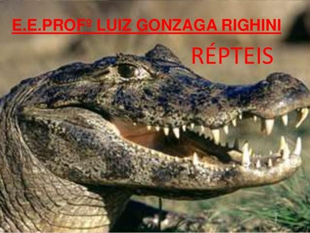 E.E.PROFº LUIZ GONZAGA RIGHINI RÉPTEIS