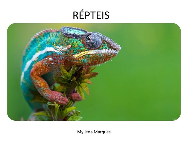 RÉPTEIS  Myllena Marques