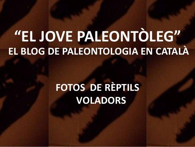 """""""EL JOVE PALEONTÒLEG"""" EL BLOG DE PALEONTOLOGIA EN CATALÀ FOTOS DE RÈPTILS VOLADORS"""