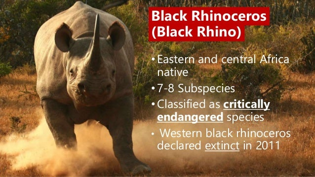 Why are rhinos endangered?