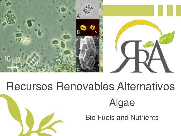 Recursos Renovables Alternativos<br />Algae<br />Bio Fuels and Nutrients<br />