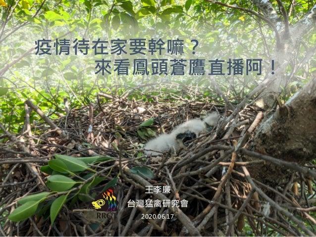 1 王李廉 台灣猛禽研究會 2020.06.17 疫情待在家要幹嘛? 來看鳳頭蒼鷹直播阿!