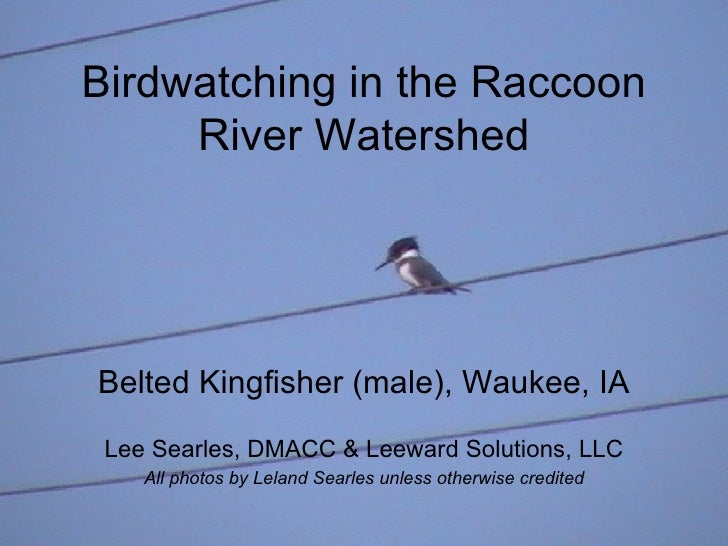 Birdwatching in the Raccoon River Watershed Belted Kingfisher (male), Waukee, IA Lee Searles, DMACC & Leeward Solutions, L...
