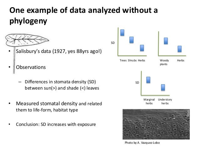 Phylogeny In R Bianca Santini Sheffield R Users March 2015