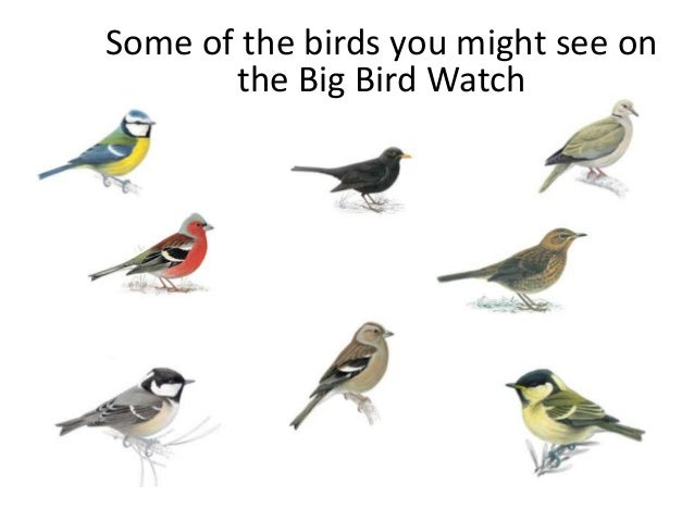 Some of the birds you might see on       the Big Bird Watch
