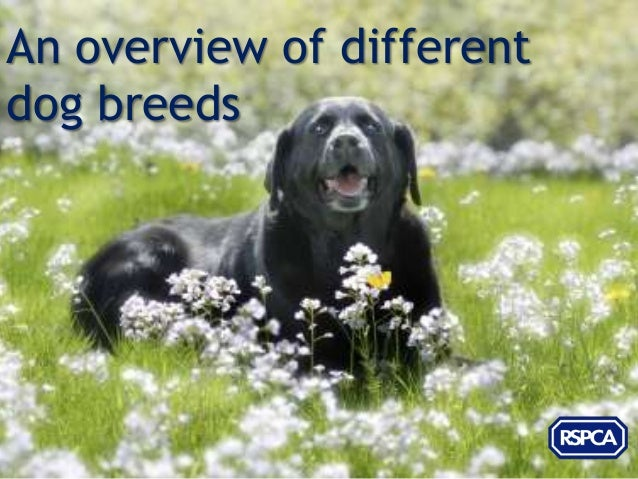 An overview of differentdog breeds