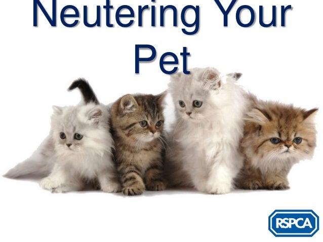 Neutering Your     Pet