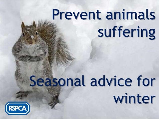 Prevent animals         sufferingSeasonal advice for            winter