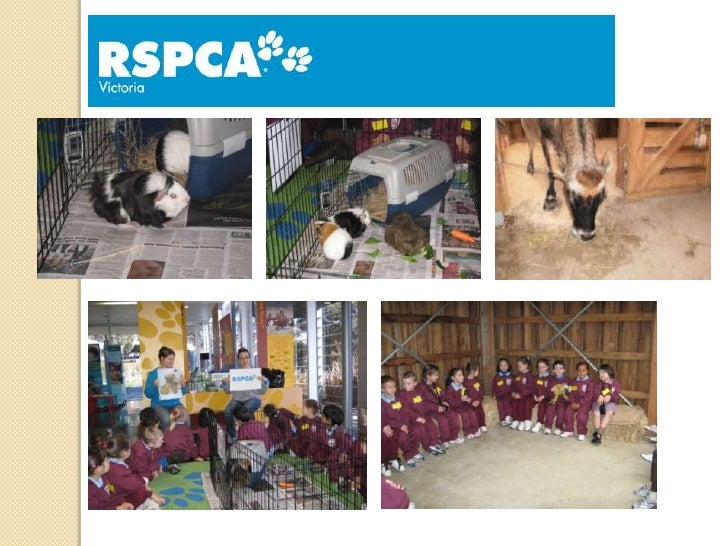 Why do we needan RSPCA?- Adoption for animals who owners can't lookafter them any more- To keep animals safe- Look after a...
