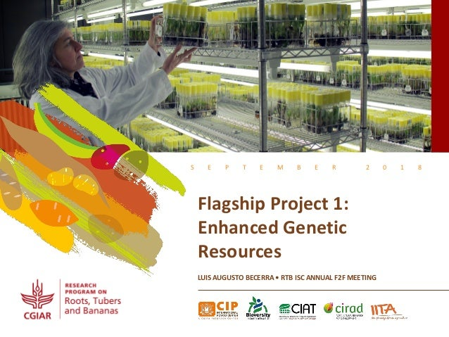 S E P T E M B E R 2 0 1 8 Flagship Project 1: Enhanced Genetic Resources LUIS AUGUSTO BECERRA • RTB ISC ANNUAL F2F MEETING