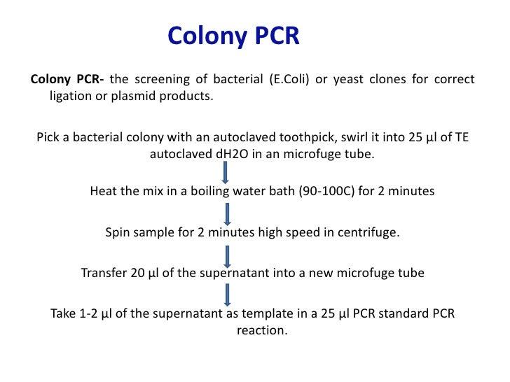 polymerase chain reaction pcr essay