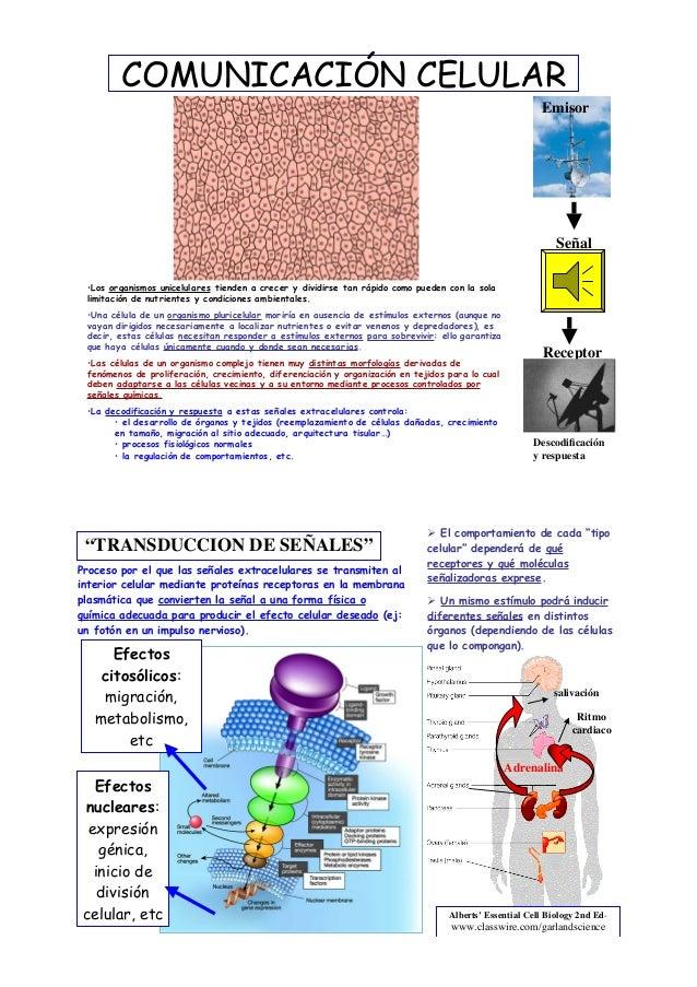 COMUNICACIÓN CELULAR  •Los organismos unicelulares tienden a crecer y dividirse tan rápido como pueden con la sola  limita...