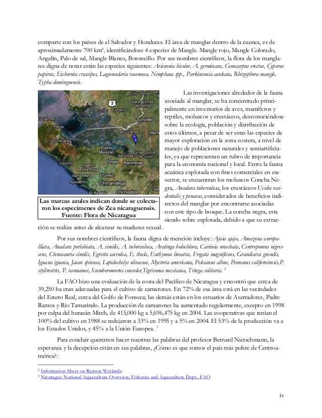 comparte con los países de el Salvador y Honduras. El área de manglar dentro de la cuenca, es de aproximadamente 700 km², ...