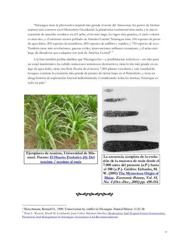 """""""Nicaragua tiene la pluvioselva tropical más grande al norte del Amazonas, los pastos de hierbas marinas más extensos en e..."""