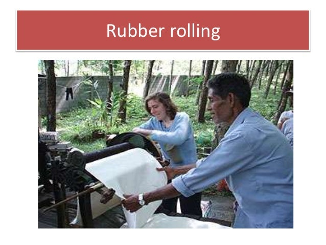 Rubber Hrvest And Processing 3