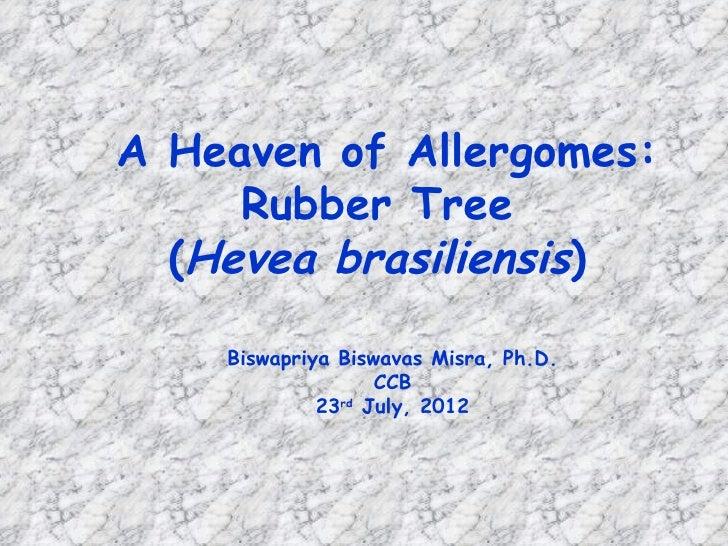 A Heaven of Allergomes:     Rubber Tree  (Hevea brasiliensis)    Biswapriya Biswavas Misra, Ph.D.                   CCB   ...