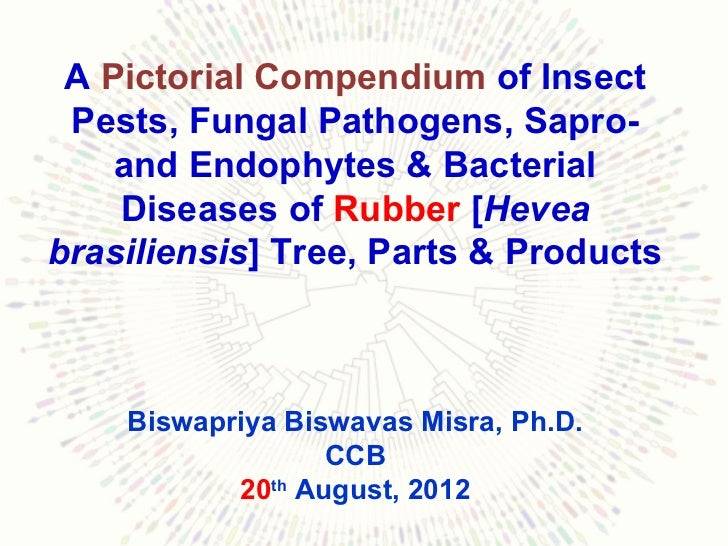 A Pictorial Compendium of Insect Pests, Fungal Pathogens, Sapro-    and Endophytes & Bacterial    Diseases of Rubber [Heve...