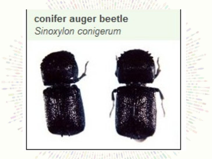 A Pictorial Compendium Of Insect Pests Fungal Pathogens