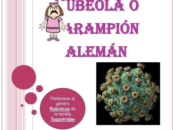 RUBÉOLA O SARAMPIÓN       ALEMÁNPertenece al   géneroRubivirus de  la familiaTogaviridae