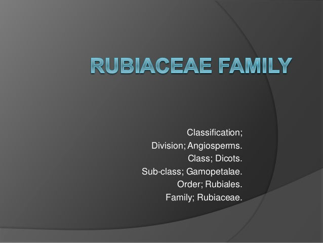 Classification; Division; Angiosperms. Class; Dicots. Sub-class; Gamopetalae. Order; Rubiales. Family; Rubiaceae.