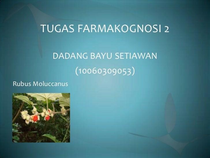 TUGAS FARMAKOGNOSI 2           DADANG BAYU SETIAWAN                   (10060309053)Rubus Moluccanus