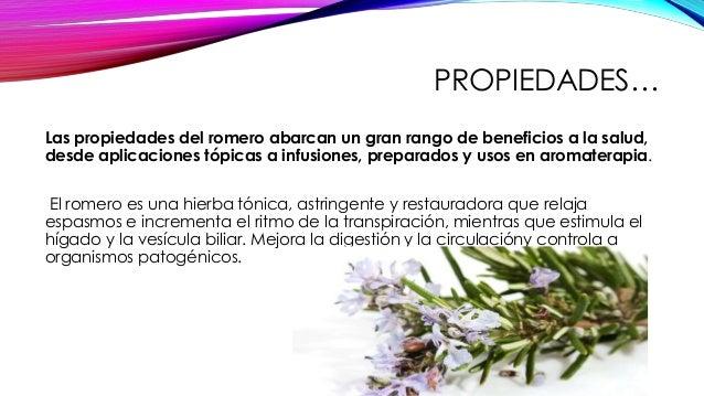 Ruda oregano romero eucalipto medicina alternatica - Informacion sobre el eucalipto ...