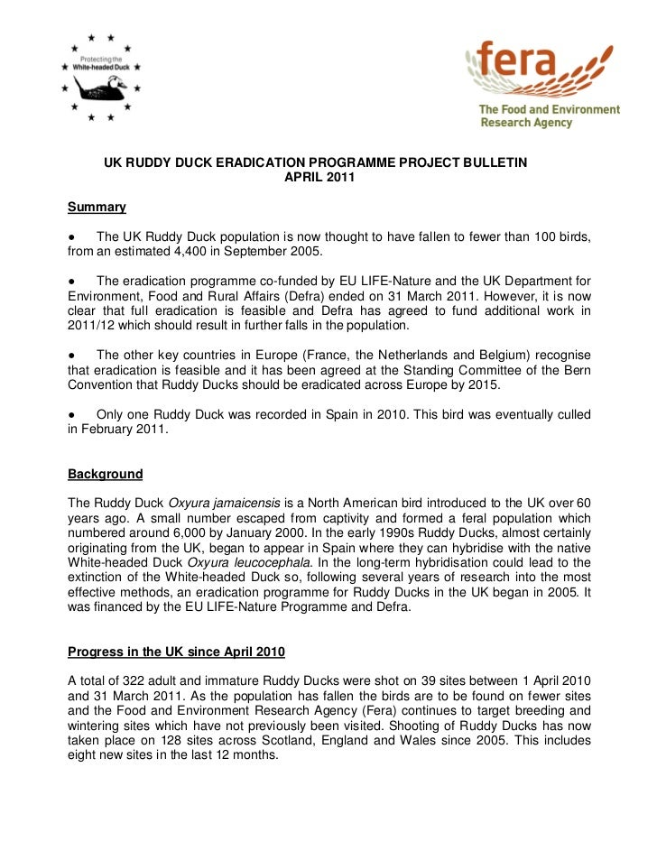 UK RUDDY DUCK ERADICATION PROGRAMME PROJECT BULLETIN                             APRIL 2011Summary●    The UK Ruddy Duck p...