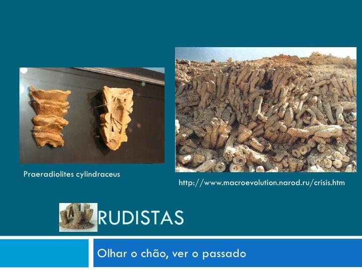 Praeradiolites cylindraceus                                   http://www.macroevolution.narod.ru/crisis.htm               ...