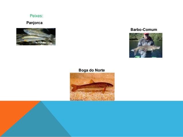 RéguaCharnecas secas europeiasCharnecas oromediterrânicas endémicas com giestas espinhosas