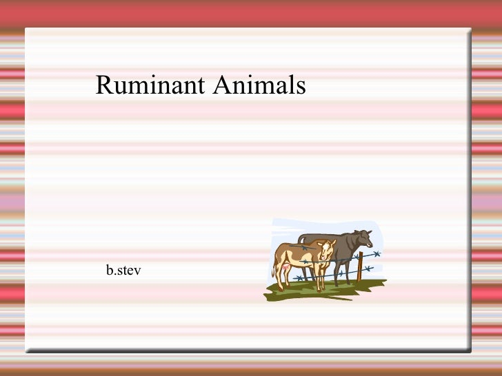 Ruminant Animals b.stev