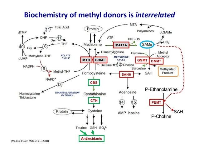Methyl Magic Maximum Health Through Methylation Craig