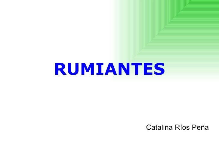 RUMIANTES Catalina Ríos Peña