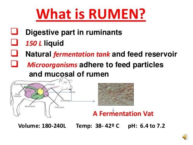 Ruminant fluid