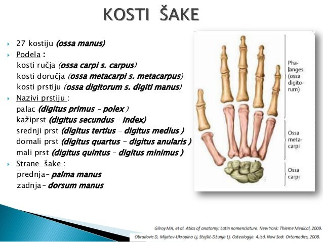degrees of carpal tunnel syndrome health and social care essay Carpal tunnel syndrome a term paper presented to the faculty of information technology in partial fulfillment of the requirements for the degree of bachelor of science in information technology barros, nikki jezzel c introduction carpal tunnel syndrome or cts is a condition where an affected person finds his hands being numb for quite some time and then suddenly feels a sharp, tingling pain .