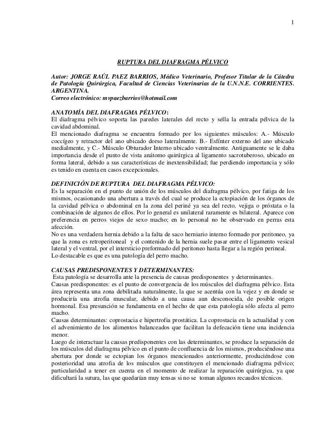 1 RUPTURA DEL DIAFRAGMA PÉLVICO Autor: JORGE RAÚL PAEZ BARRIOS, Médico Veterinario, Profesor Titular de la Cátedra de Pato...